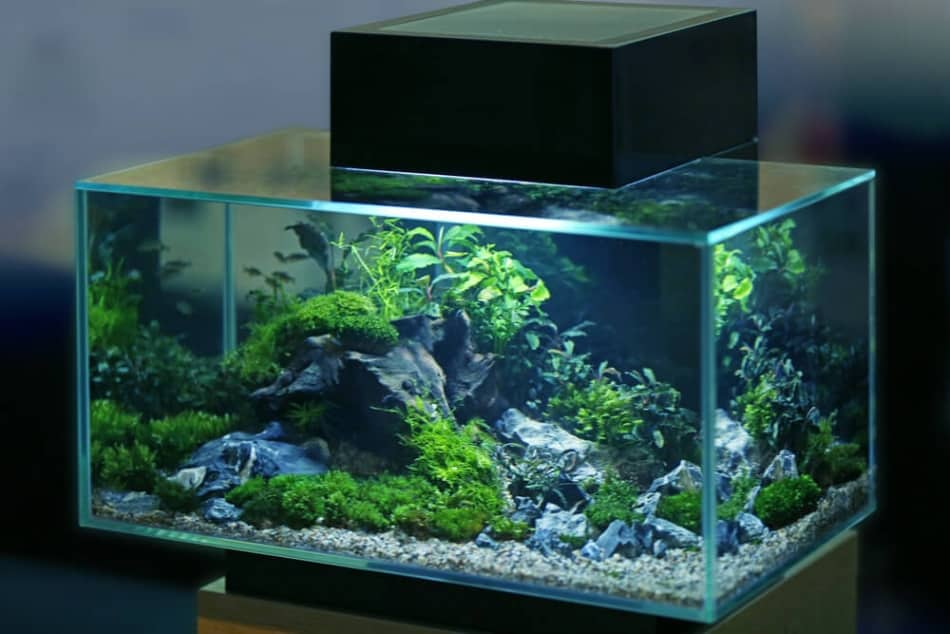 How to Clean an Aquarium